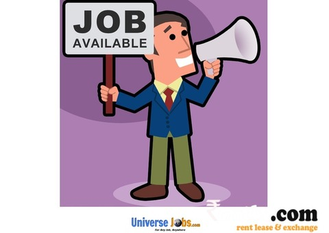 Customer Care Executive - Looking For a Job